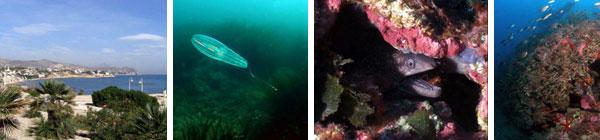 Ruta Submarina El Caballon